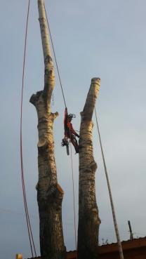 Спил, снос, валка деревьев в Новосибирске и области
