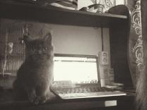 отдам в добрые руки персидского котенка