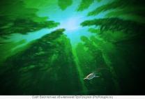 Мобильный Планетарий   фото 5 из 6