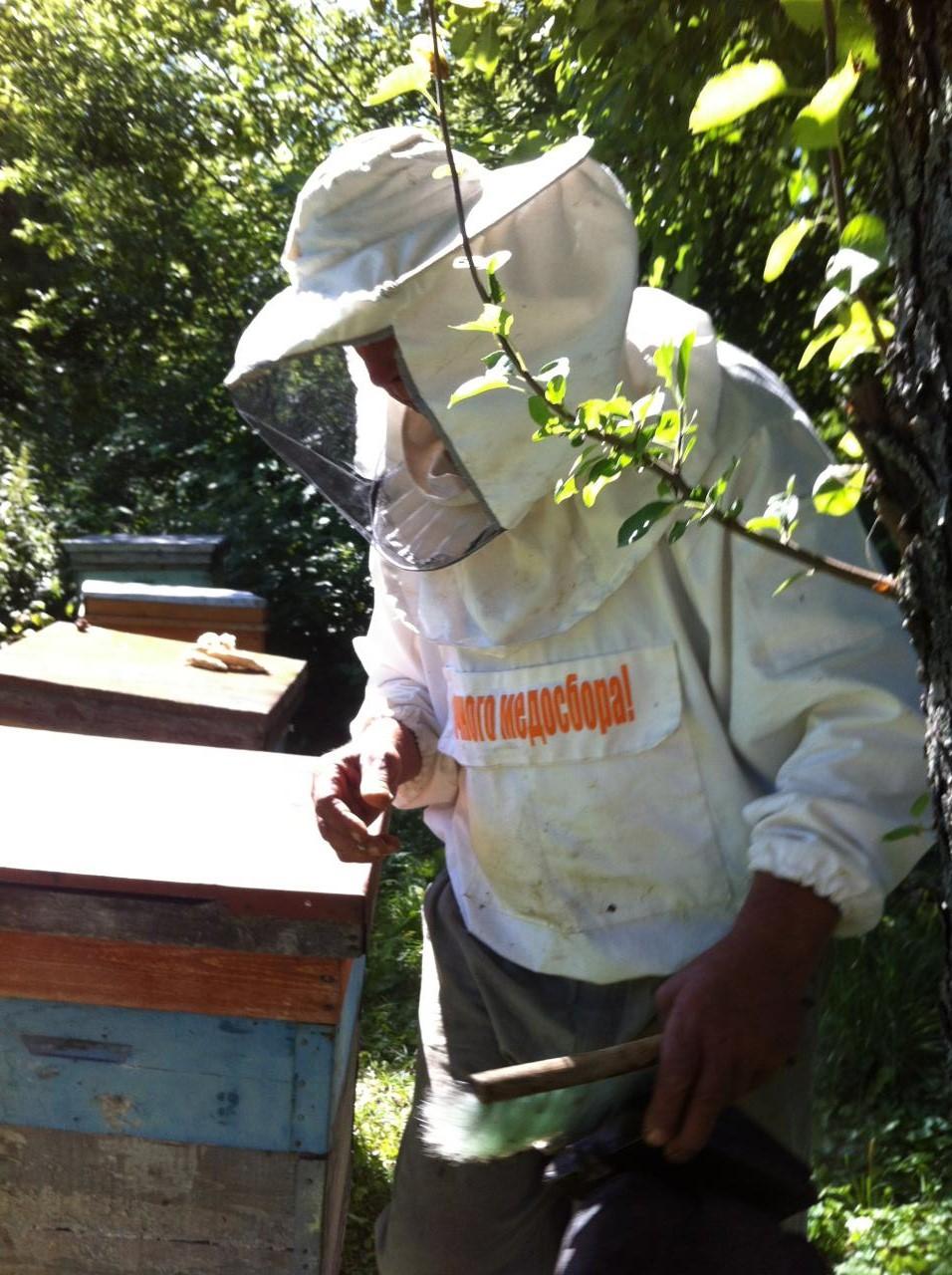 пчелосемьи | фото 1 из 1