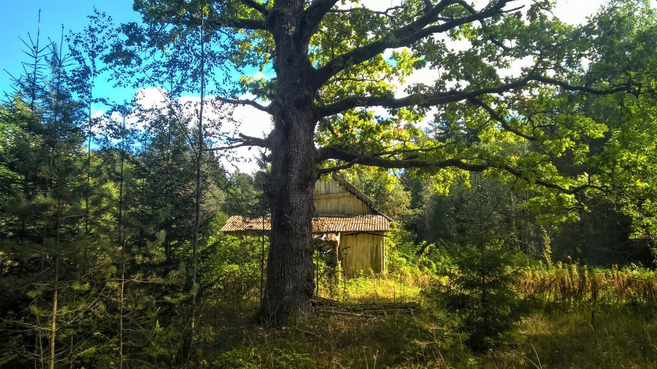 Шикарный участок на лесной поляне под строительство   фото 1 из 6