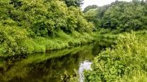 Участок 16 соток в петле реки под Псковом | фото 2 из 6