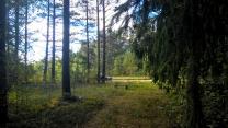 Шикарный участок на лесной поляне под строительство   фото 2 из 6