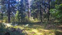 Шикарный участок на лесной поляне под строительство   фото 3 из 6