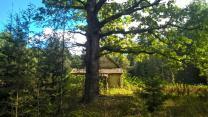 Шикарный участок на лесной поляне под строительство