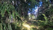 Шикарный участок на лесной поляне под строительство   фото 5 из 6
