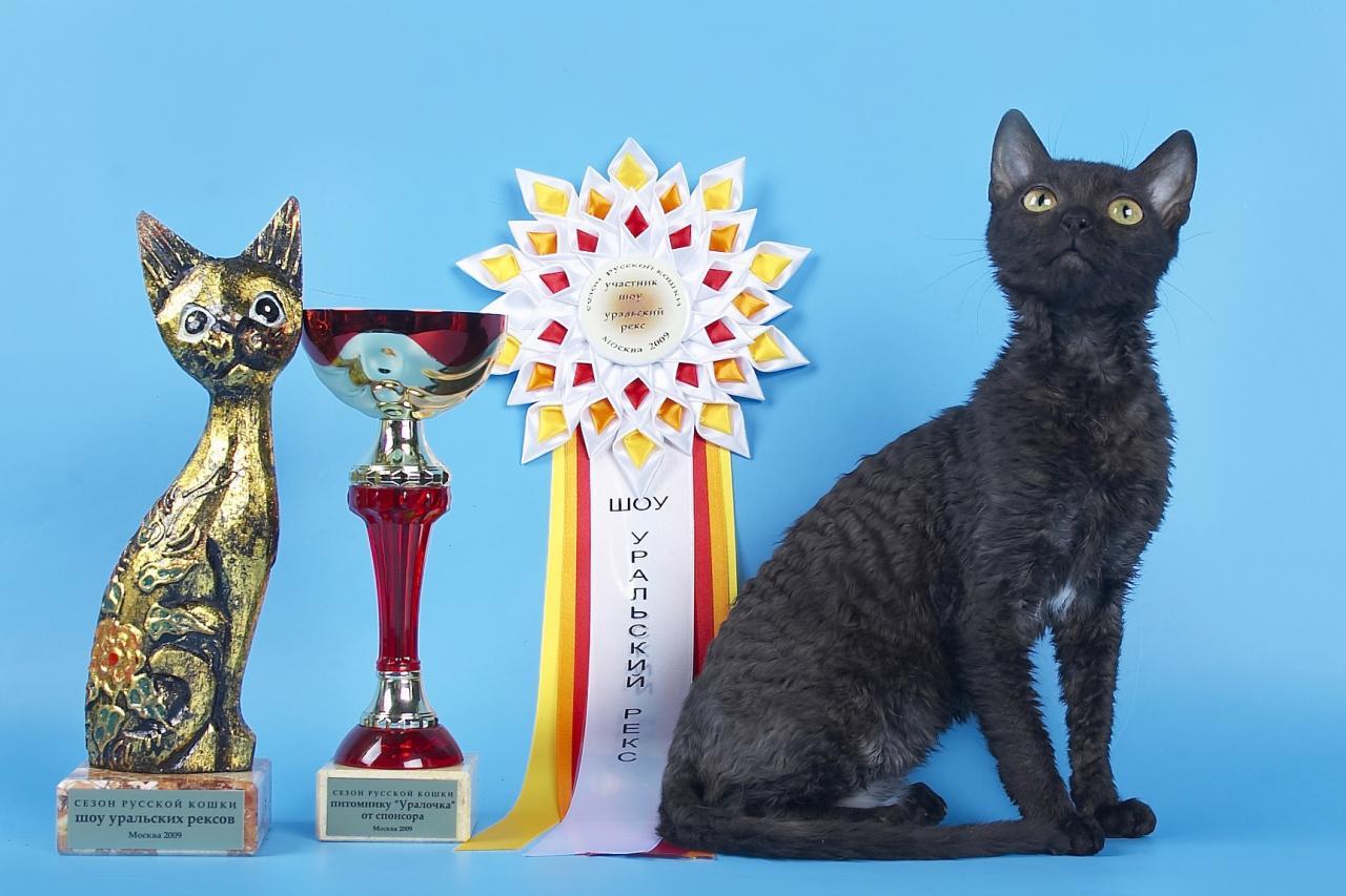неаллергенные кошки купить котёнка | фото 1 из 3