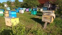 Пчелы, пчелопакеты, расплод,мед, ульи