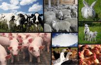 Кальций ракушечник-молотый для с/х животных и подкормки птиц,  отвечающих требованиям ГОСТ 26826-86 | фото 3 из 3