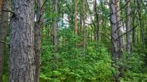 Уютный земельный участок 25 соток ИЖС на лесной опушке под Псковом  | фото 2 из 6