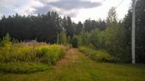 Уютный земельный участок 25 соток ИЖС на лесной опушке под Псковом  | фото 4 из 6