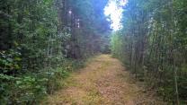 Уютный земельный участок 25 соток ИЖС на лесной опушке под Псковом  | фото 3 из 6