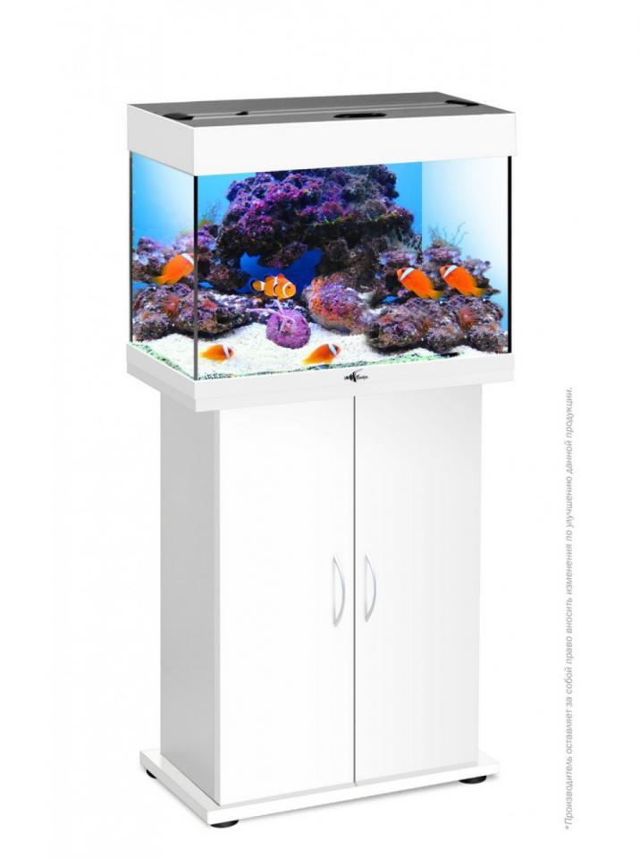 Магазин аквариумов Seaprice в Москве. Аквариумы, террариумы, оборудование для аквариумов, рыбки и аксессуары. | фото 1 из 1