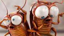Уничтожение тараканов, клопов, дезинфекция