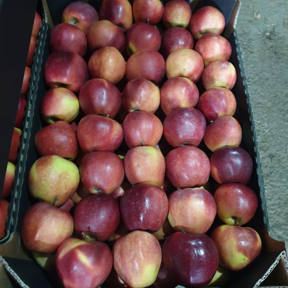 Продам яблоки | фото 1 из 2
