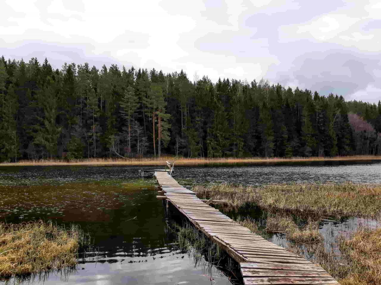 Чудесный участок 53 сотки у живописного озера под Печорами  | фото 1 из 6