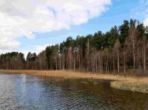 Чудесный участок 53 сотки у живописного озера под Печорами  | фото 5 из 6