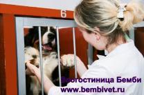 Ветеринарная клиника Бемби на улице Цюрупы.