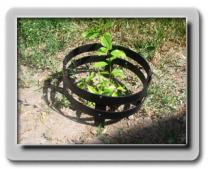 Оборудование выпуска пластиковых садовых оград Премиум | фото 2 из 3