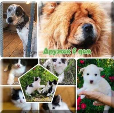 Собаки и щенки в дар   фото 1 из 1