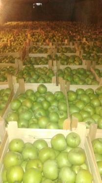 Фрукты,овощи из Молдовы!!!   фото 2 из 2