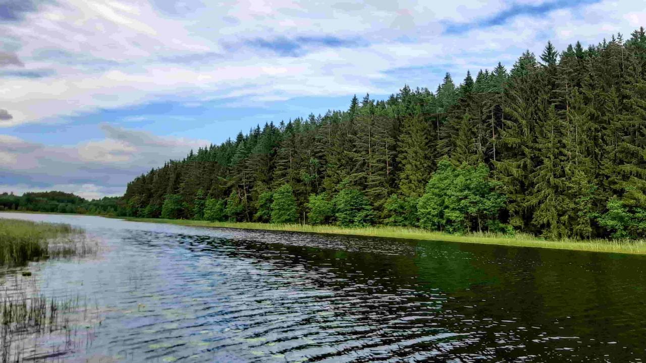 Шикарный участок 50 соток рядом с красивым озером под Печорами  | фото 1 из 6