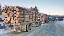 Требуются услуги лесовоз