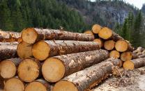 Продаем лес кругляк   фото 3 из 4