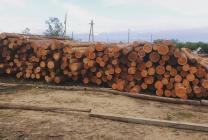 Продаем лес кругляк   фото 2 из 4