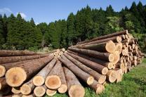 Продаем лес кругляк   фото 4 из 4